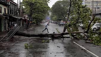 Ein in Sri Lankas Hauptstadt Colombo während des Sturms auf die Strasse gestürzter Baum