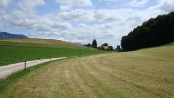 Der Eimattbach soll auf einer Länge von 250 Metern geöffnet werden.
