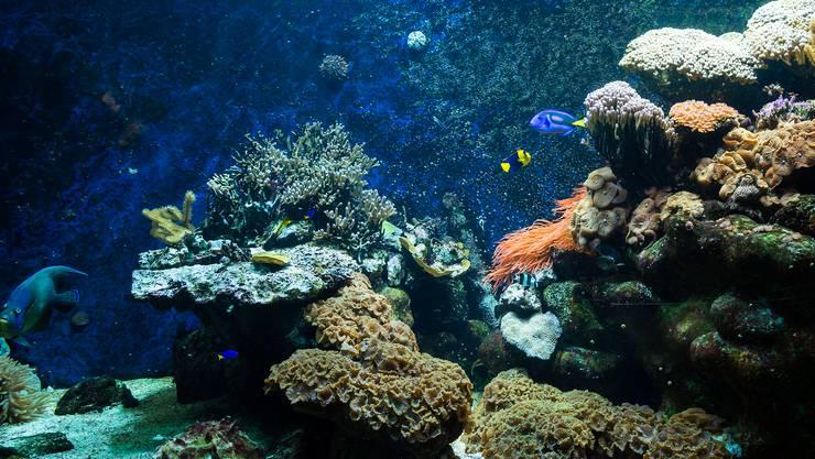 Ozeanium in Basel: In 30 Stationen soll der Besucher eine Art Weltreise machen.