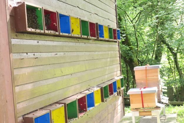 Das Bienenhaus auf dem Birmensdorfer Altenberg mit 24 Bienenstöcken