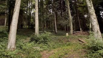Die Unterstützung der Wiederbewaldungsmassnahmen von Schadenflächen soll mithelfen, dass stabile Waldbestände entstehen. (Symbolbild)