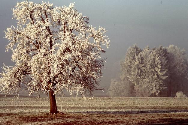 Winterzauber am Lindenberg
