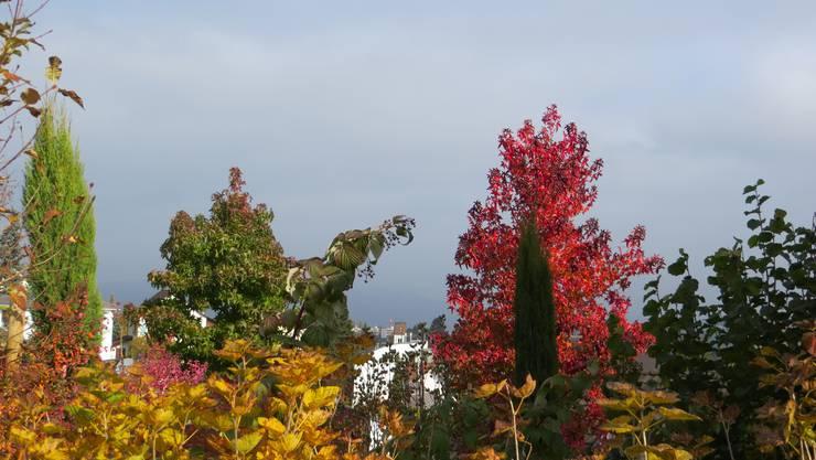 Einfach die Farbenpracht im Herbst (Frenkendorf).