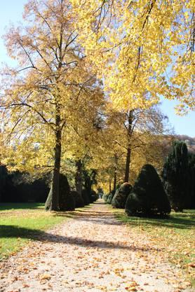 Die Allee im alten Stadtfriedhof an der Bruggerstrasse lädt zu einem gemütlichen Feierabendspaziergang.