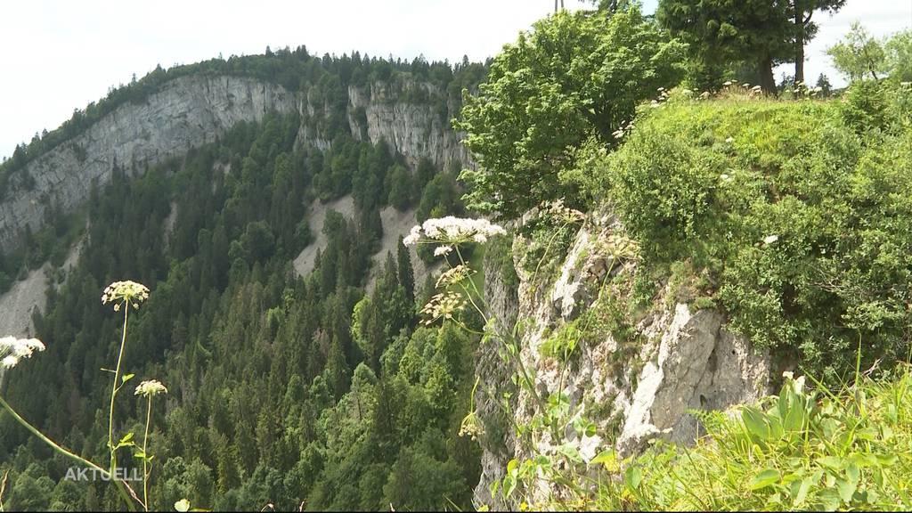 Weltruhm: Der Buchenwald auf dem Bettlachstock ist neues «UNESCO Naturerbe»
