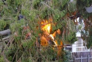 Der Baum fing aufgrund der Leitungen Feuer
