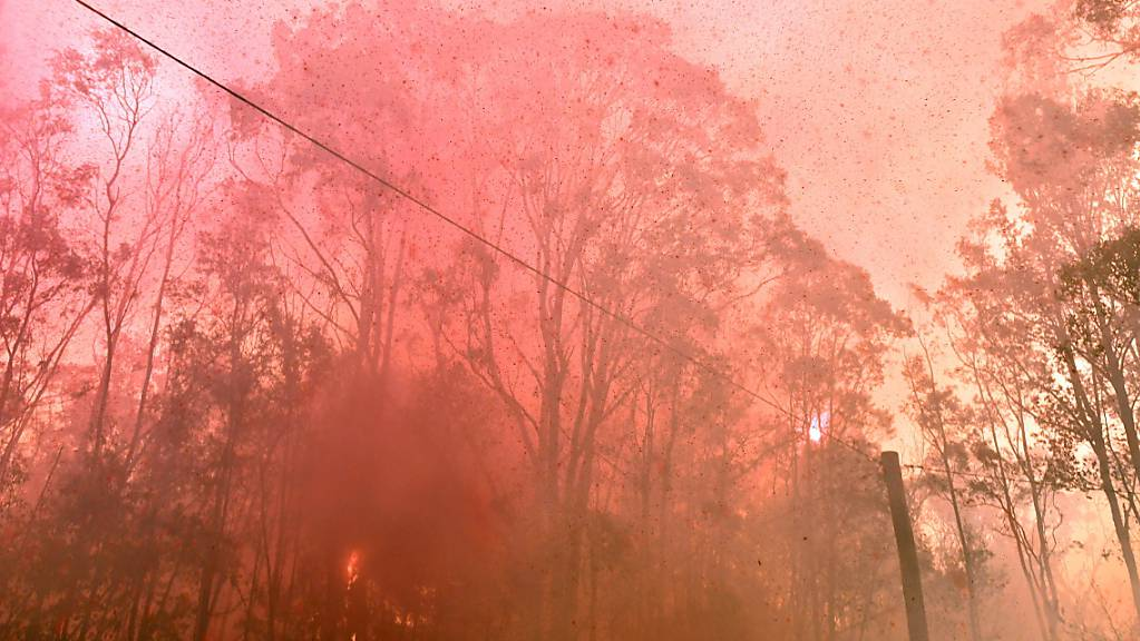 Buschfeuer am Freitag in Werombi, 50 Kilometer südlich von Sydney.
