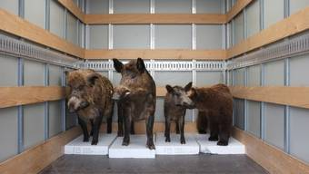 Umbau der Dauerausstellung im Naturmuseum Solothurn