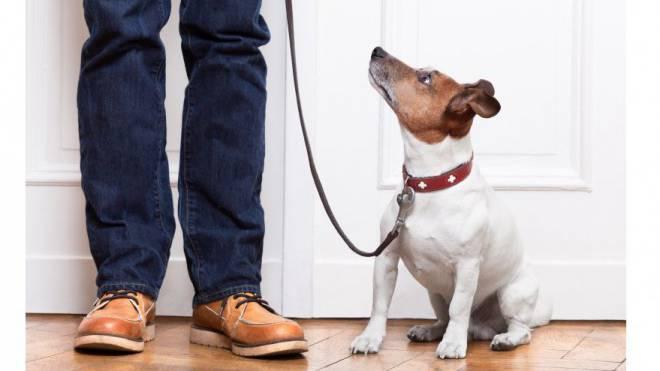 Viele Haustier-Halter müssen wählen: Hund oder Traumwohnung. Foto: Shutterstock