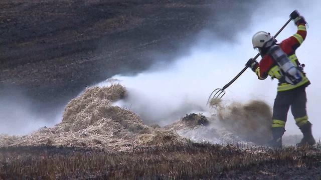 Boniswil: Brand zerstört Weizenfeld – Grosseinsatz für die Feuerwehr