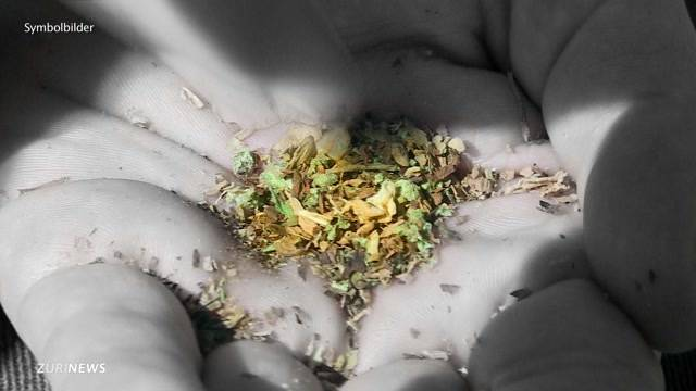 Neuer Anlauf für Kiffen-Legalisierung