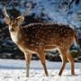 Leserbilder Januar 2019: die schönsten Tierfotos