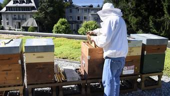 Bisher war es für Imker mühsame Zählarbeit, den Varroa-Milben-Befall ihrer Bienenstöcke zu bestimmen. Eine App soll künftig helfen. (Archivbild)