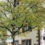 Der gemeindeeigene Landgasthof ist für Riehen eine Hypothek.