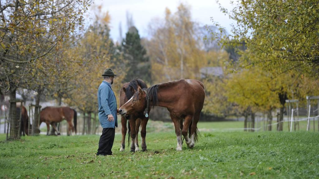 Der verurteilte Pferdehändler U. K.* sieht nach seinen Pferden auf der Weide. (Archivbild)