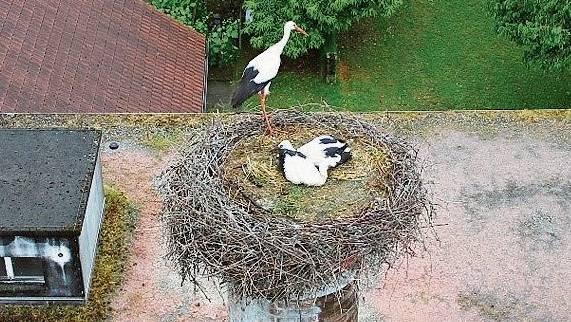 Seit 2000 gibt es in Stetten regelmässig Storchennachwuchs.