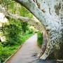 Bäume und Grünflächen bereichern eine Stadt in verschiedener Hinsicht. (Archivbild)