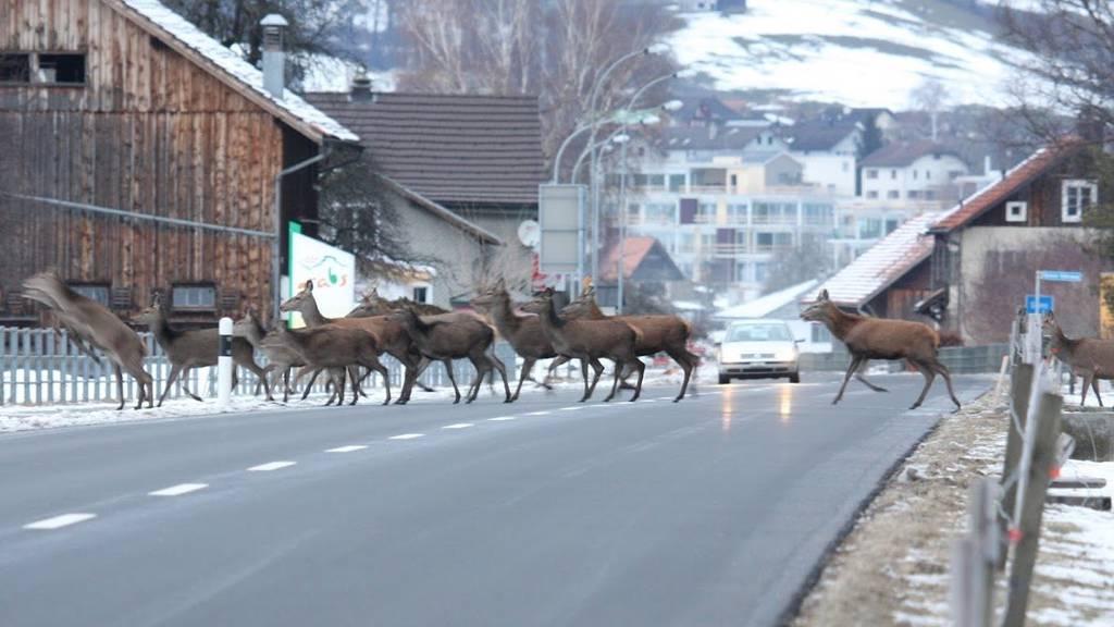 Weil auf den Strassen derzeit viel Wild unterwegs ist, wurde die Geschwindigkeitslimite zum Teil angepasst.