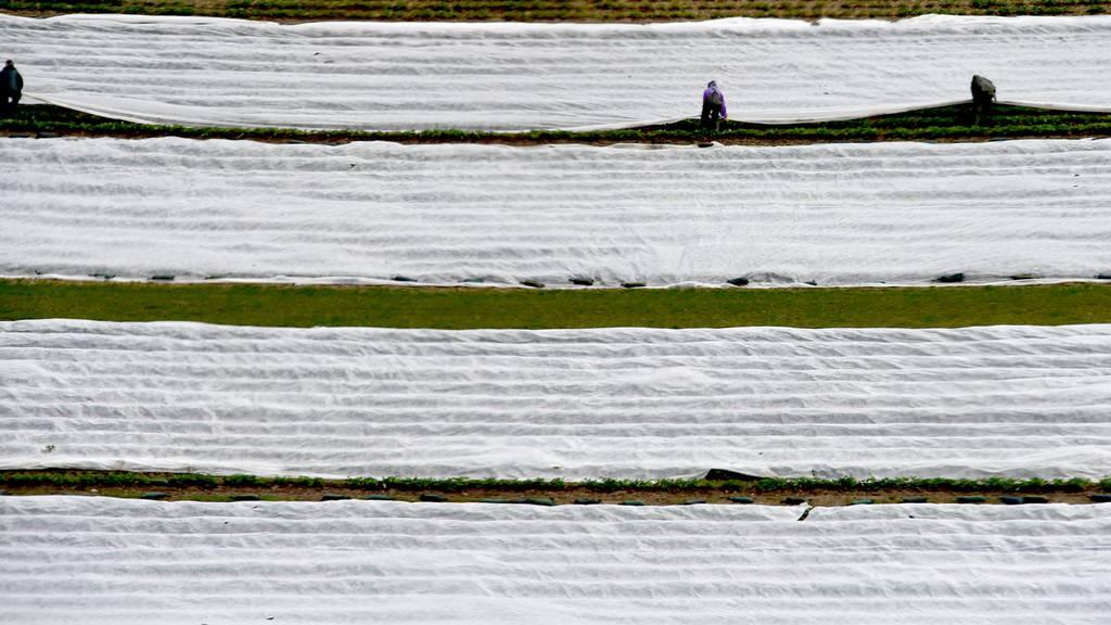 Bauern bereiten sich auf Frost vor