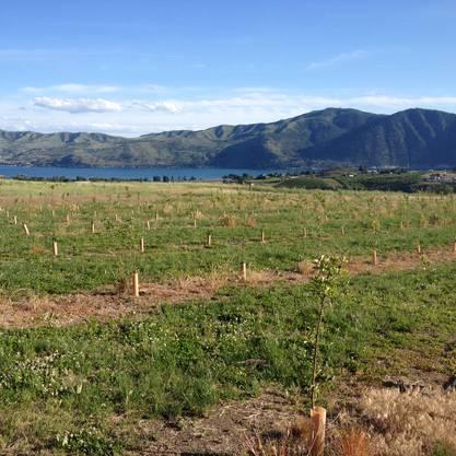 200 Apfelbäume gedeihen auf dem Land der Familie Bider in Manson (Washington State/USA)