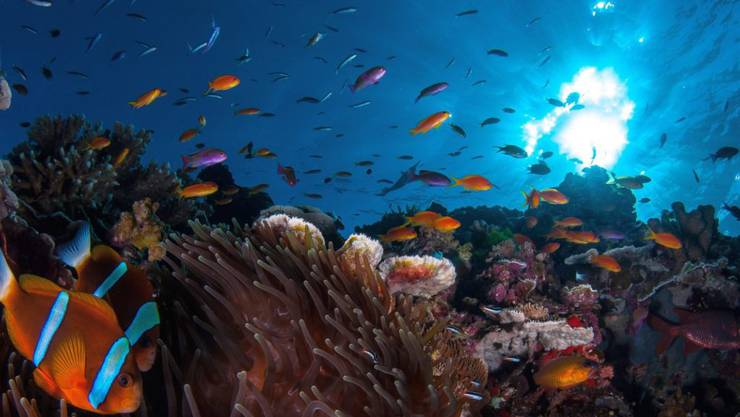 Der Inselstaat Palau will mit einem Verbot bestimmter Sonnencremes seine Korallen schützen. Im Bild Korallem des Great Barrier Reef in Australien. (Themenbild)