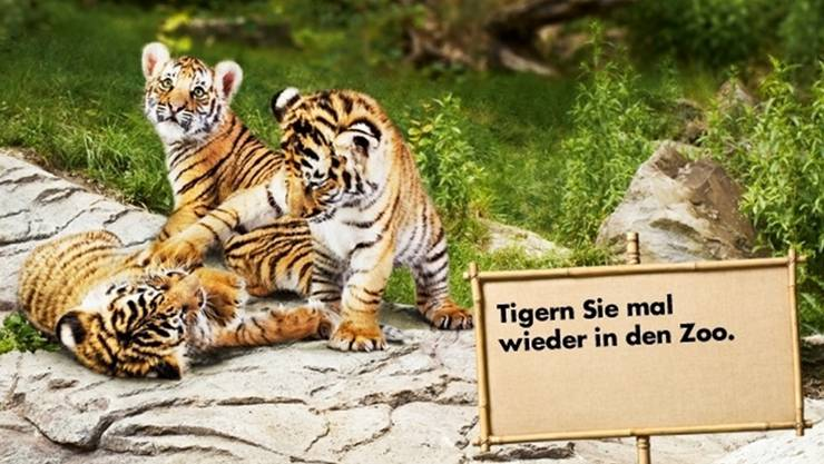 Dank der Vergrösserung in Richtung Binningen könnte der Zoo Basel dereinst wie im Zoo Zürich Tiger beherbergen.