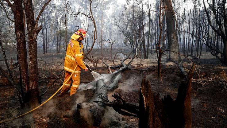 Die Feuerwehr bekämpft die Buschfeuer.