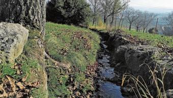 Der Mölmattenbach in Pieterlen soll umfassend renaturiert werden.