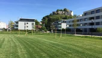 Die Profile stehen bereits. Am 26. Mai wird der Teegarten dann errichtet.