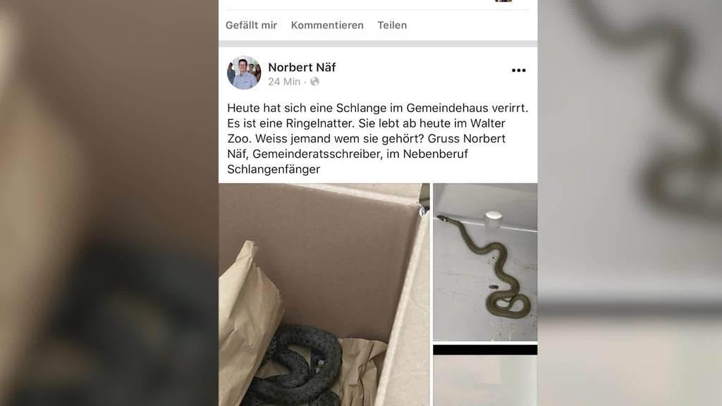 Schreckmoment: Gemeindeschreiber findet Schlange