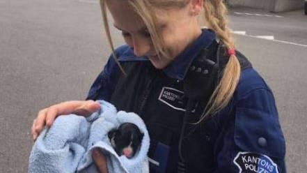 Eine Kantonspolizistin trägt eines der neugeborenen Hundebabys.