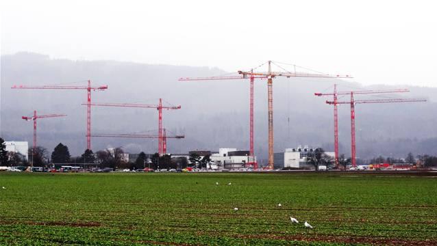 Die meisten dieser Kräne auf dem Gelände der Novartis in Stein stehen auf dem Neubauareal. – Foto: chr