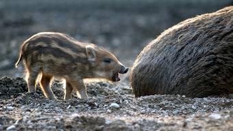Niedlicher Nachwuchs im Tierpark Lange Erle (August 2013)