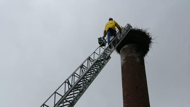 Mit der Feuerwehrleiter: Alois Vogler holt Jungstorch Lorenz zur Beringung aus dem Nest.