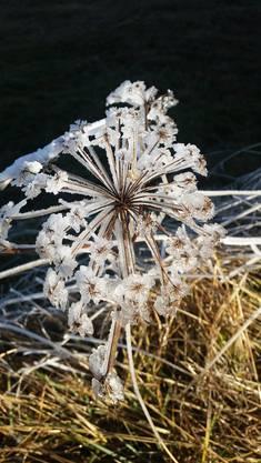 Der frost lässt neue Blüten Entstehen