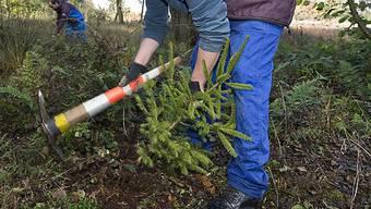 Auch Arbeiten im Wald sind eine Alternative zum Militärdienst.