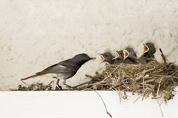 Foto 1: Papa, füttere uns endlich! Foto 2 Mamma, wir haben Hunger!