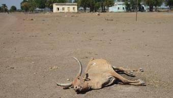 Eine tote Kuh in einer vom Krieg mitgenommenen Stadt im Südsudan - im jungen Stadt droht wegen Missernten und Bürgerkrieg eine Hungersnot. (Archiv)