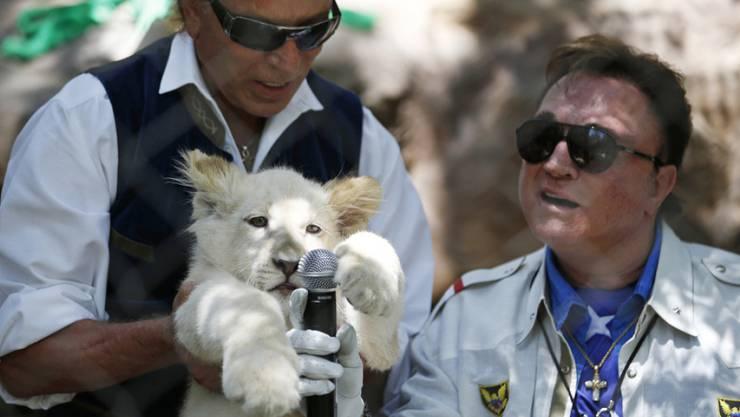Siegfried Fischbacher (links) und Roy Horn mit einem ihrer jungen Tiger. Die Lebensgeschichte des ungewöhnlichen Duos wird verfilmt. (Archivbild)