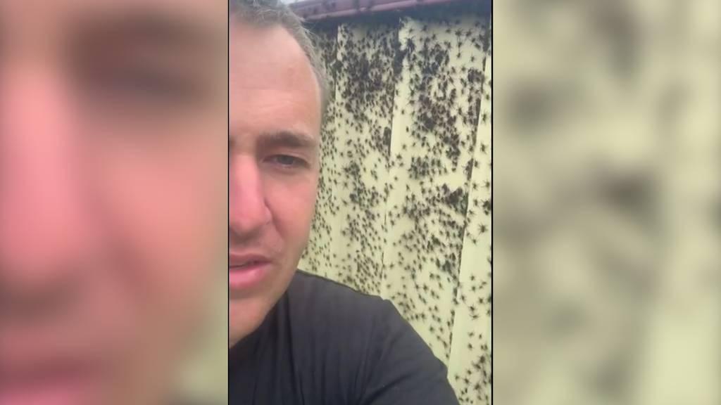 Wegen Hochwasser: Spinnen-Invasion im Garten
