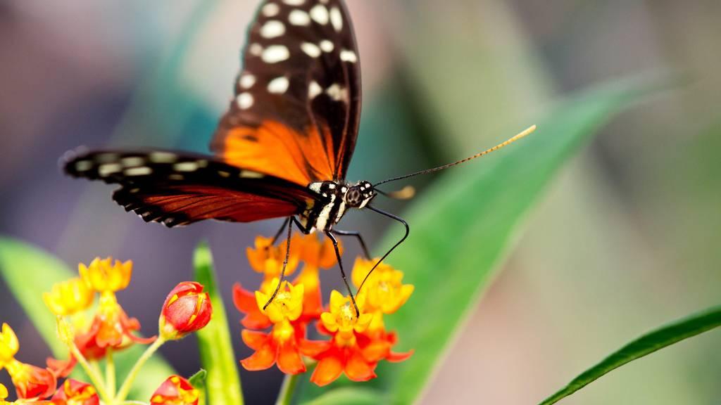 Bienen und Schmetterlinge finden weniger Futter