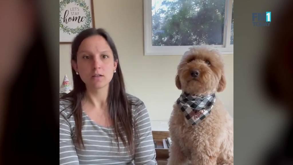 Diese Challenge bringt deinen Hund um den Verstand