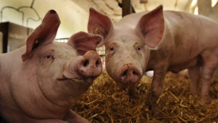 Das Leben auf dem Bauernhof kann vor Allergien schützen.