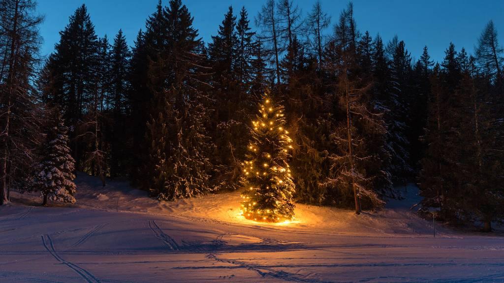 Weihnachten Wald
