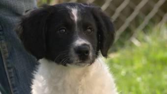 Die Geschichte des in Niederwil ausgesetzten Hundes berührt viele Zuschauer. Das zuständige Tierheim kann sich vor Hilfeangeboten kaum retten.
