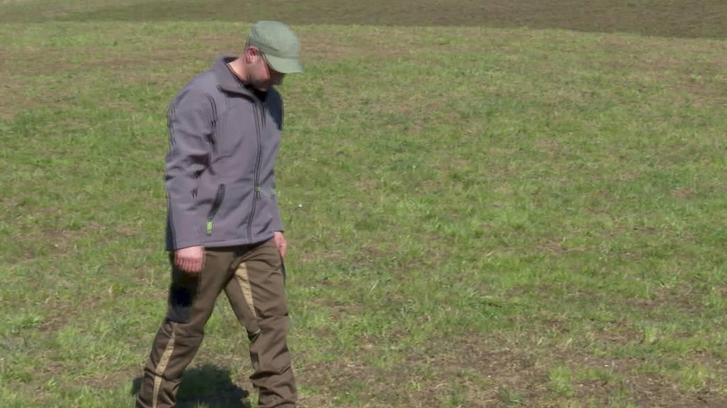 Frust: Mäuseplage macht Bauern das Leben schwer