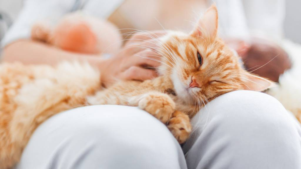 Katzen sind sozialer als gedacht