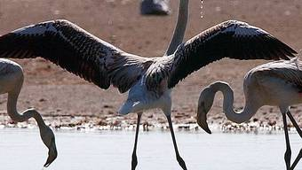Vogelschutzgebiet bedroht (Archiv)