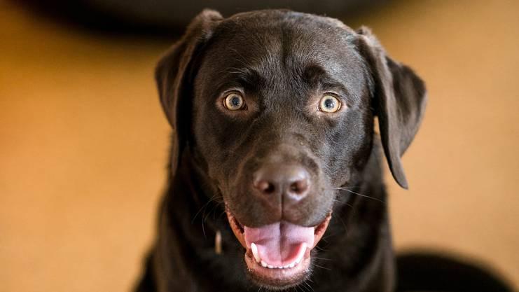 Wie vom kantonalen Hundegesetz vorgeschrieben, hat Kröger mit Yaris einen obligatorischen Erziehungskurs von insgesamt 14 Lektionen absolviert.