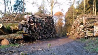 Hackholzhaufen des Forstbetriebs Studenland (Gemeinden Bad Zurzach, Schneisingen, Ehrendingen, Mellikon, Siglistorf) stehen bereit für den Wärmeverbund.